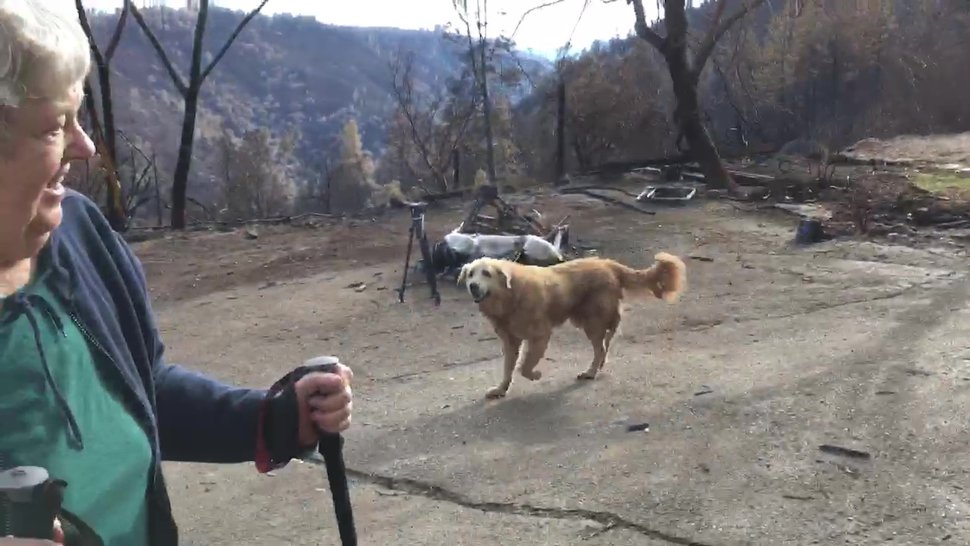 In this Friday Dec. 7, 2018, image from video provided by Shayla Sullivan, Madison, the Anatolian shepherd dog that apparently guarded his burned home for nearly a month, approaches his owner, Andrea Gaylord, as she was allowed back to check on her burned property in Paradise, Calif. Sullivan, an animal rescuer, left food and water for Madison during his wait. Gaylord fled when the Nov. 8 fire destroyed the town of 27,000. (Shayla Sullivan via AP)
