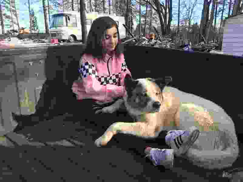 Dog reunited with family 101 days after California wildfire