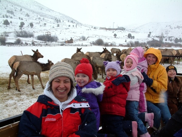 (Utah Division of Wildlife Resources) Another season of viewing wild elk from a horse-drawn wagon or sleigh begins Dec. 8 at Hardware Ranch.