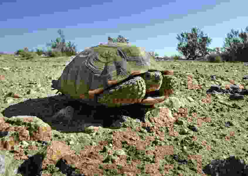 Proposed highway sparks concern over threatened tortoise
