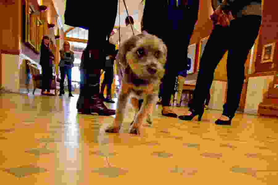 Salt Lake City passes puppy mill ordinance to protect pets, their owners