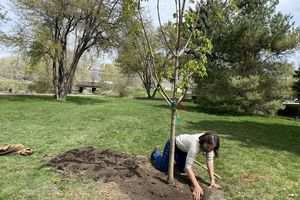 (Photo courtesy of Salt Lake City Mayor Erin Mendenhall via Twitter) Salt Lake City Mayor Erin Mendenhall helps plant a tree during a ceremony at the International Peace Gardens in Jordan Park on Monday, April 19, 2021. Mendenhall has committed to planting 1,000 trees in Salt Lake City's west side every year of her term as mayor.