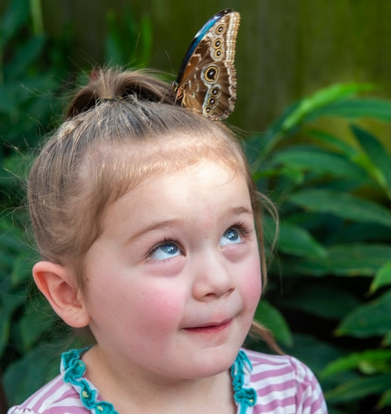 (Rick Egan | The Salt Lake Tribune) A butterfly lands on the head of 4-year-old Maycee Barker, at the Butterfly Biosphere at Thanksgiving Point's Water Tower Plaza in Lehi. Tuesday, Jan. 22, 2019. The Butterfly Biosphere is home to more than a thousand butterflies from around the world. The exhibit also has dozens of species of butterflies.