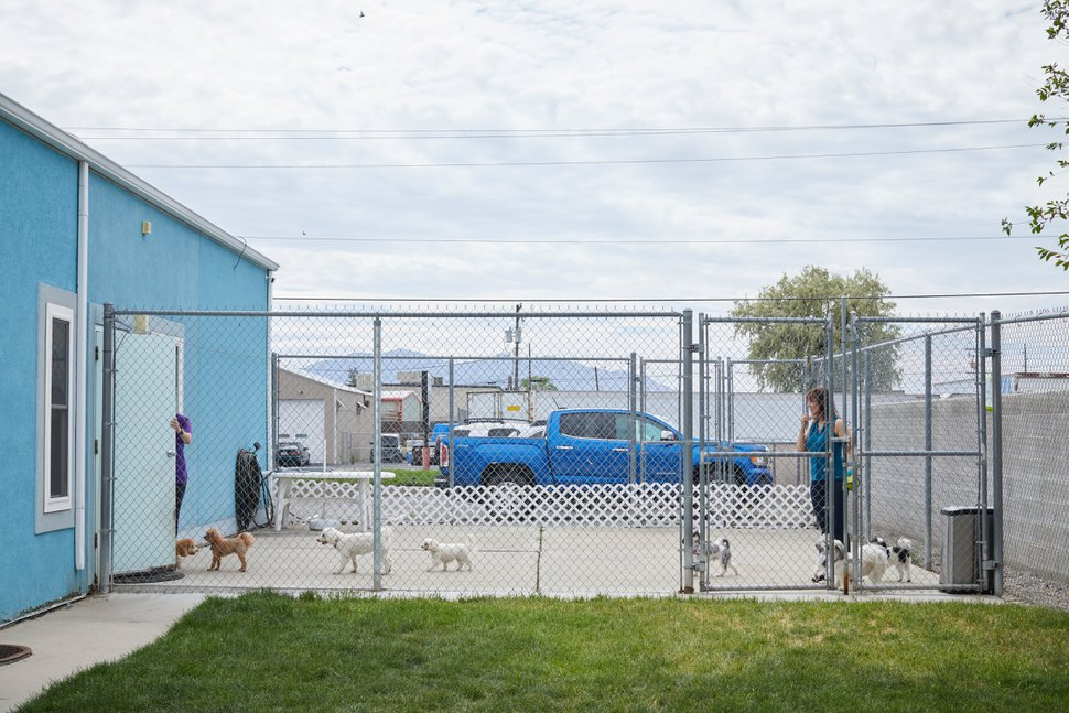 (Lindsay D'Addato | The New York Times) Jennifer McMurrough, owner of Little Dogs Resort in Salt Lake City, May 26, 2020. McMurrough had nine full-time employees (one quit because of the pandemic) and some part-time help, but a loan through the federal government's Paycheck Protection Program helped her keep paying her workers, who are still caring for Little Dogs Resort's handful of canine clients, but she's frustrated by the program's shifting rules and complicated terms.