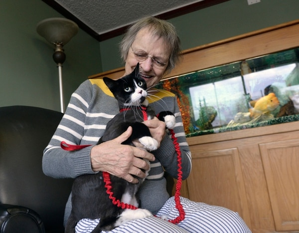 (Al Hartmann | The Salt Lake Tribune) It's the 50th anniversary of Friendship Manor at 500 S. 1300 East in Salt Lake City. Stefanie Brasher, resident at Friendship Manor, plays with her cat, Tuxedo, in the common area. Tuxedo likes to watch the fish in the aquarium.