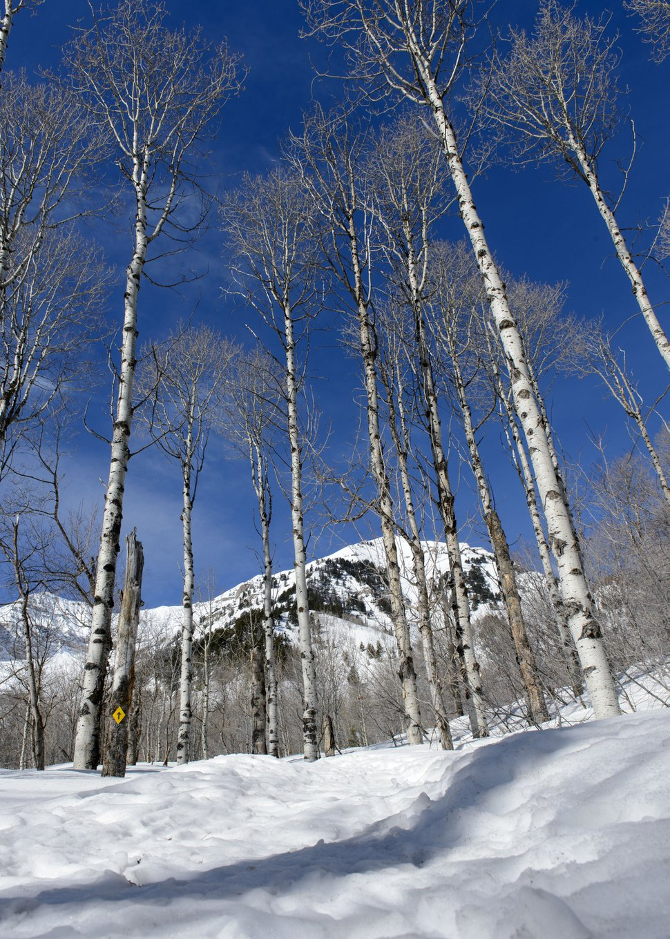 Steve Griffin | The Salt Lake Tribune The snowshoe trail at the Sundance Nordic Center in Provo Canyon Thursday March 9, 2017.