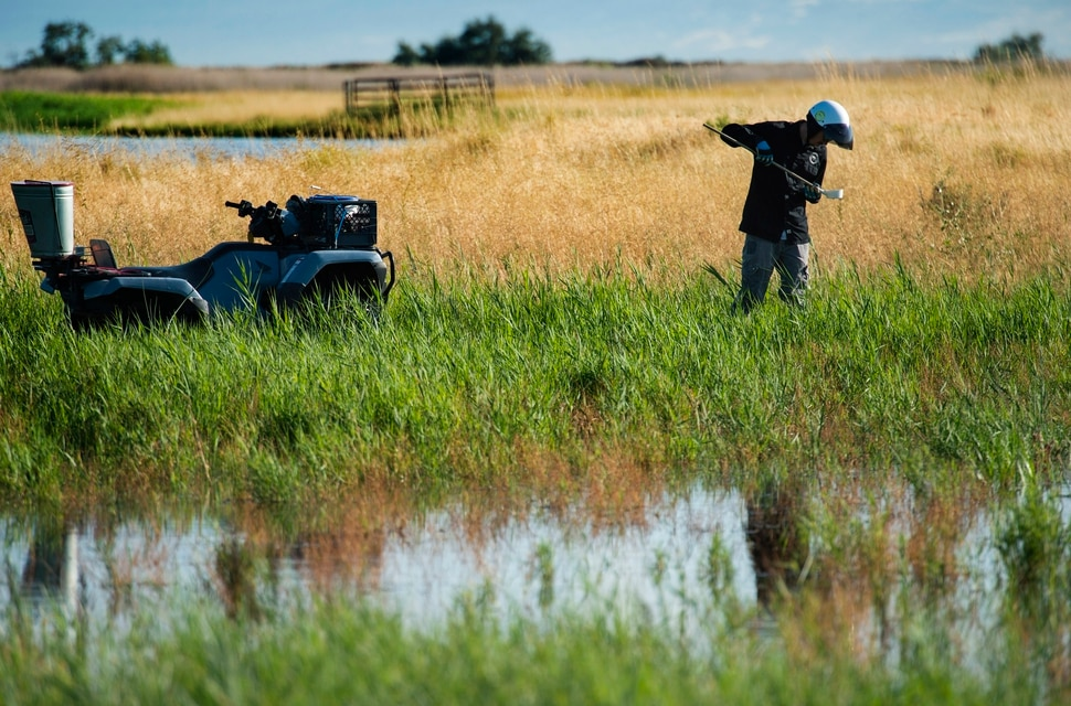 (Rick Egan | The Salt Lake Tribune) Quinten Salt checks the water for mosquito larva in the wetlands north of the Salt Lake International Airport, Thursday, Sept. 12, 2019.