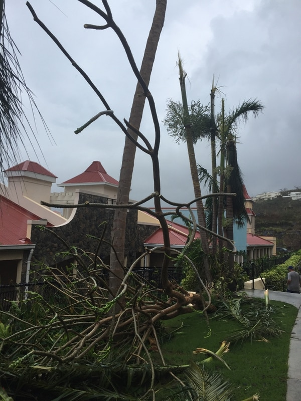 (Photo courtesy of Lyle Winterton) Hurricane Irma toppled trees and power lines in St. Thomas last week, leaving the Caribbean island without power.