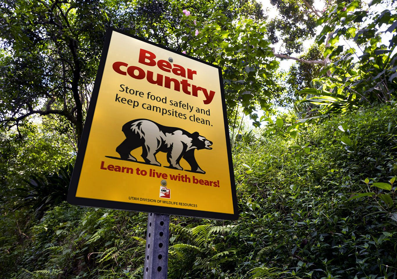 Utah's bears are out in force this year so clean up and don't feed them