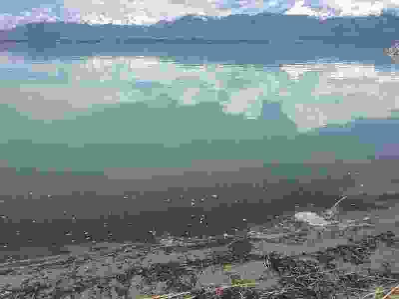 First harmful algal bloom of the summer appears at Utah Lake