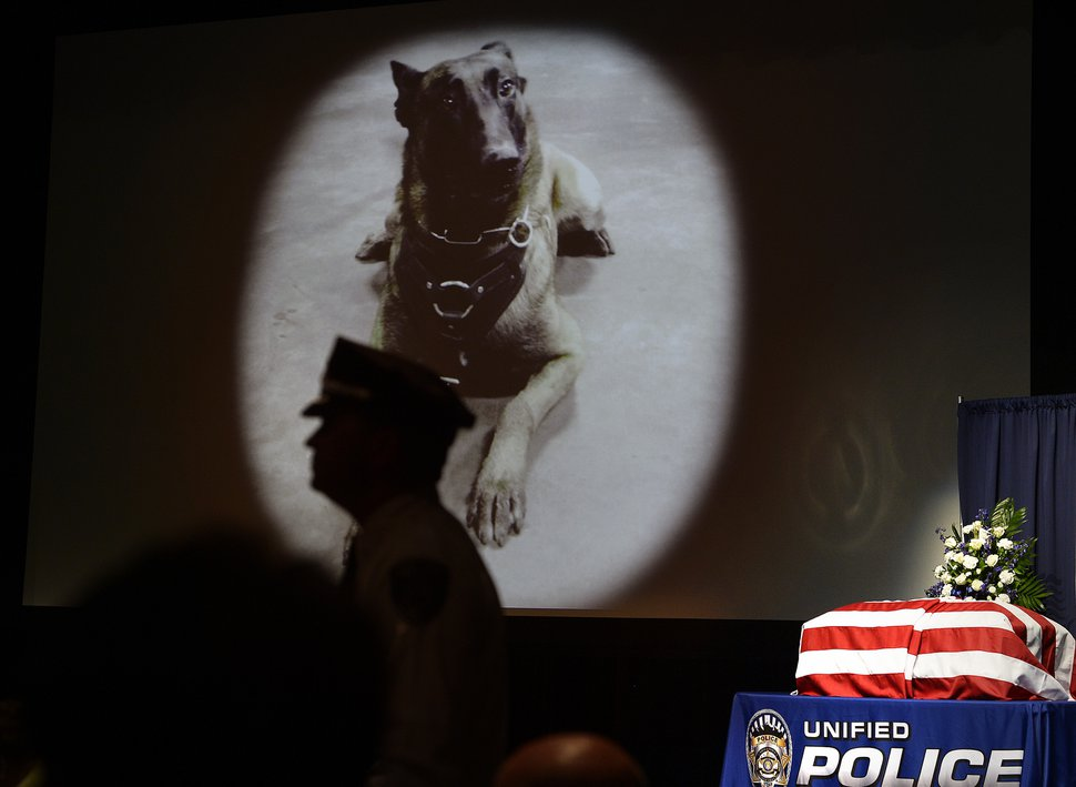 A Utah man was convicted of several charges, including killing a police dog, in a case that helped change the law