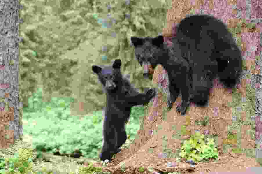A father and son killed a bear and her cubs in Alaska, then tried to cover it up. A wildlife camera helped convict them.