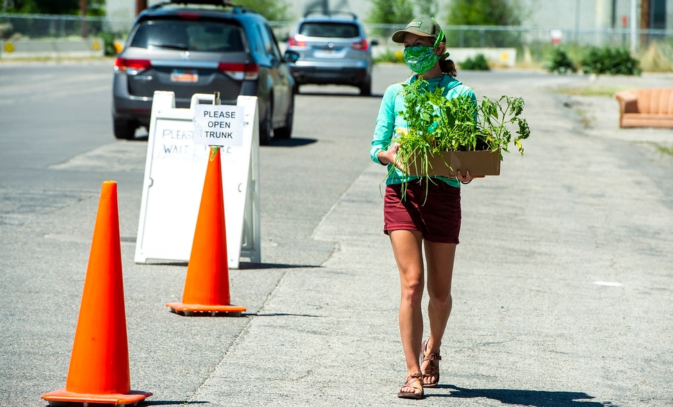 (Rick Egan | The Salt Lake Tribune) Savannah Simmons-Grover delivers plants to a customer in their car during the Wasatch Community Gardens 2020 Spring Plant Sale Fundraiser, Saturday May 9, 2020