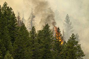 (Rick Egan | The Salt Lake Tribune) The Bear Fire burns in the mountains northwest of Helper on Wednesday, June 9, 2021.