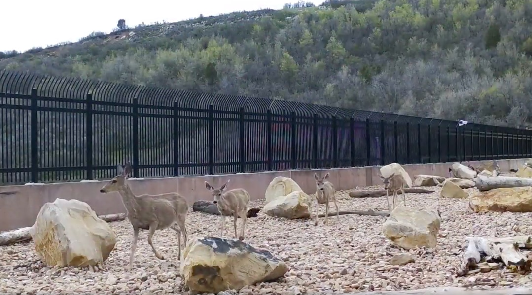 New $5 million, animals-only overpass at Parleys Summit is saving wildlife (and drivers) already