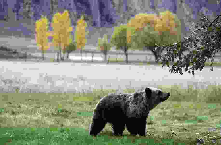 Letter: Get the facts before you condemn the proposed grizzly hunt