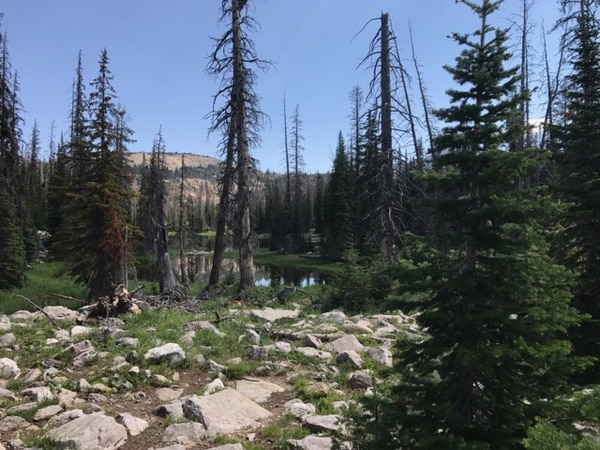 Nate Carlisle | The Salt Lake Tribune The trail to Lofty Lake winds through the trees in the Uinta Mountains on July 22, 2017. The round trip is 3.2 miles.