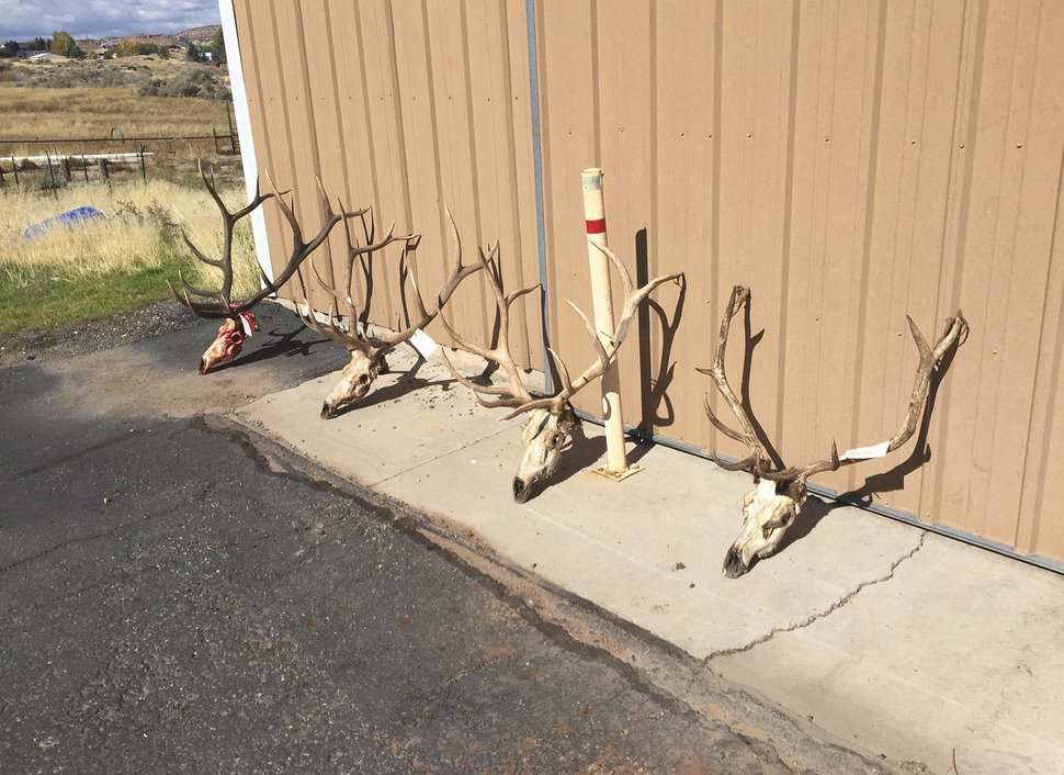 (Photo courtesy Utah Division of Wildlife Resources) William Thompson poached four bull elk and other animals in fall 2016, wildlife investigators said.