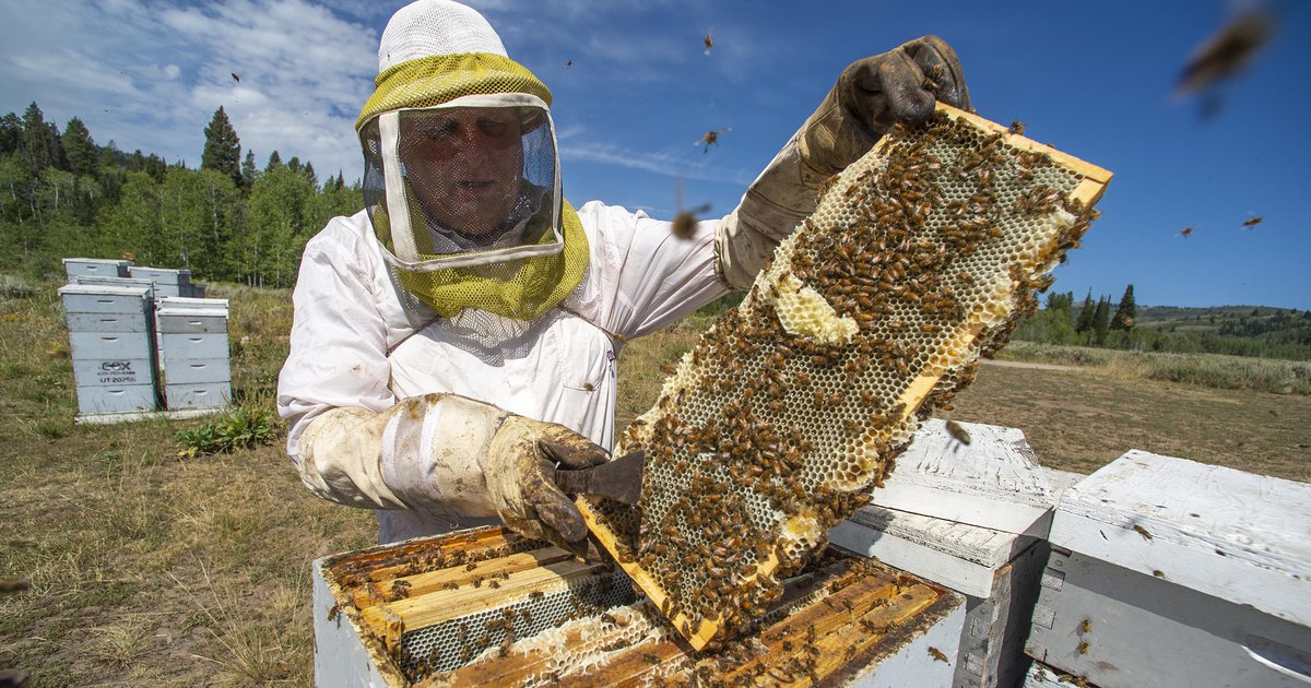 Environmental groups want to block honeybees from Utah's national forests