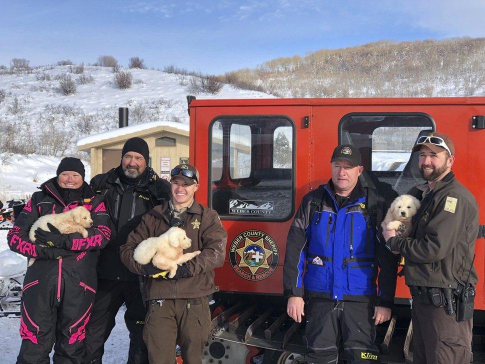 (Weber County Sheriff's Office Search and Rescue via AP) Weber County Sheriff's Office Search and Rescue officers hold Great Pyrenees puppies they rescued after the puppies were abandoned in frigid temperatures in the mountains. Snowmobilers near Monte Cristo found the puppies hiding in an animal carcass, Weber County search and rescue crew members and the state Division of Wildlife Resources said.