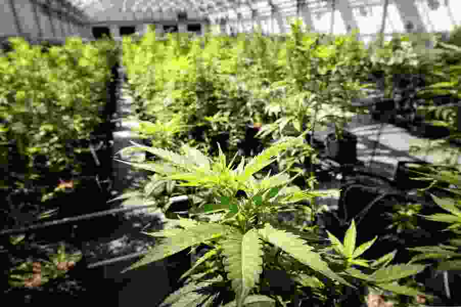 Want a license to grow medical cannabis in Utah? Expect to spend upward of $100K.