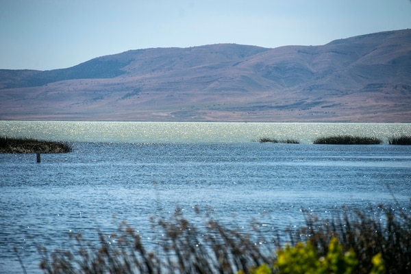 Chris Detrick | The Salt Lake Tribune A toxic algal bloom in Utah Lake Thursday, June 29, 2017.