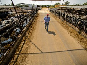 (Trent Nelson | The Salt Lake Tribune) Ron Gibson is a sixth generation dairy farmer and president of the Utah Farm Bureau. Gibson was photographed at his Ogden farm, Green Acres Dairy, Wednesday, August, 1, 2018.