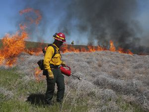 (John Roark | The Idaho Post-Register via AP, file) In this June 11, 2020 file photo Wynn Whitmeyer of the Idaho Falls Fire Department uses a drip can to ignite cheat grass and tumbleweeds during a controlled burn east of Idaho Falls, Idaho. Environmentalists have filed a notice of intent to sue the U.S government to block plans to build up to 11,000 miles of fuel breaks they claim would violate the Endangered Species Act in a misguided effort to slow the advance of wildfires in six Western states.