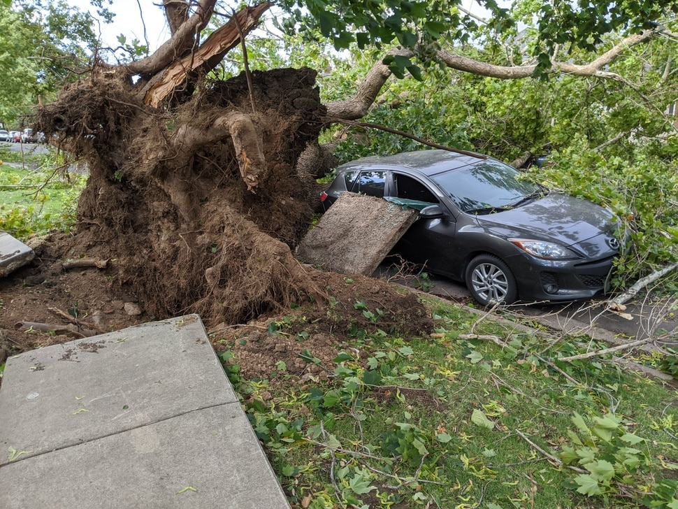 (Photo courtesy of McKenna Caldwell) A large tree is uprooted and damages the sidewalk and a nearby car on Douglas St. in Salt Lake City after a wind storm affects the Wasatch Front, Tuesday, Sept. 8, 2020.