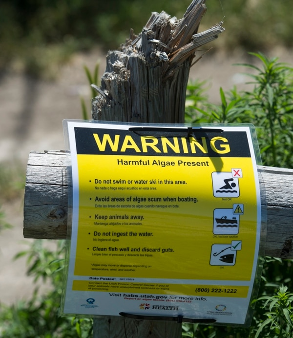 (Rick Egan | The Salt Lake Tribune) Signs near Provo Bay warn of harmful algae on parts of Utah Lake. Water experts are urging visitors to keep themselves, their pets and other animals out of Provo Bay after they detected a potentially toxic blue-green algal bloom there, Tuesday, June 12, 2018.