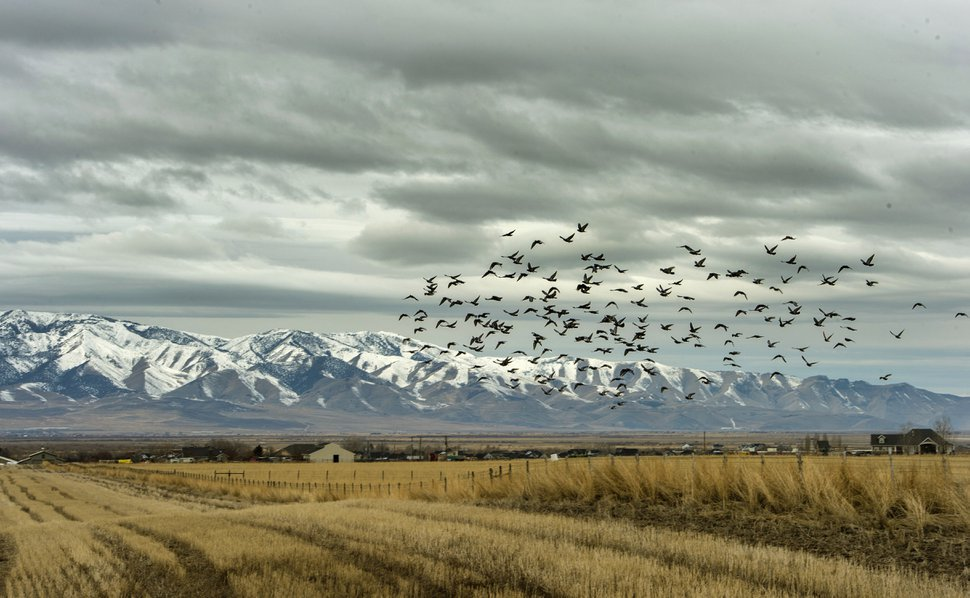 (Rick Egan | Tribune file photo) The Romney Group, a private real estate investment company, is pushing for the creation of a 12,000-acre satellite port in Tooele County, which includes Erda. Photographed here, Jan. 28, 2020.
