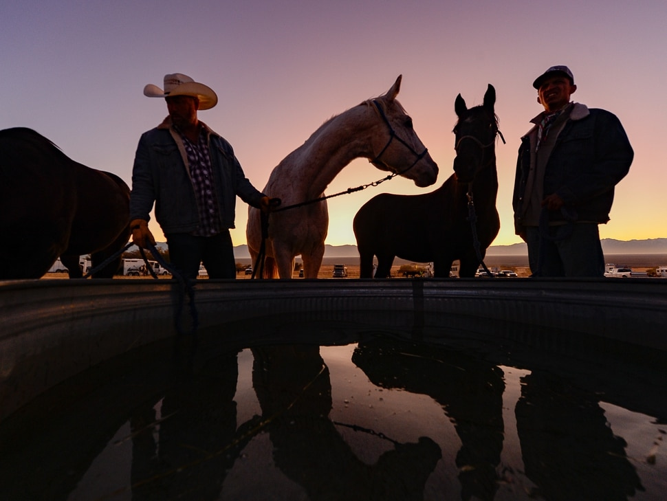 (Francisco Kjolseth | The Salt Lake Tribune) Riders prepare their horses at first light for the 33rd annual Bison Roundup, Saturday, Oct. 26, 2019, on Antelope Island, a state park located near Syracuse in Davis County. Every year Utah wildlife and parks officials move the animals from across the island so they can be weighed, tagged and given health screenings.