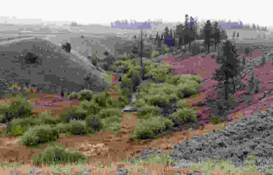 Study: Carnivores' return helps Yellowstone park streams