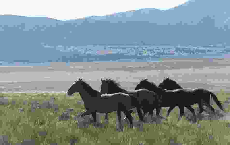 Hannah Downey: Adoption is a way forward for wild horses