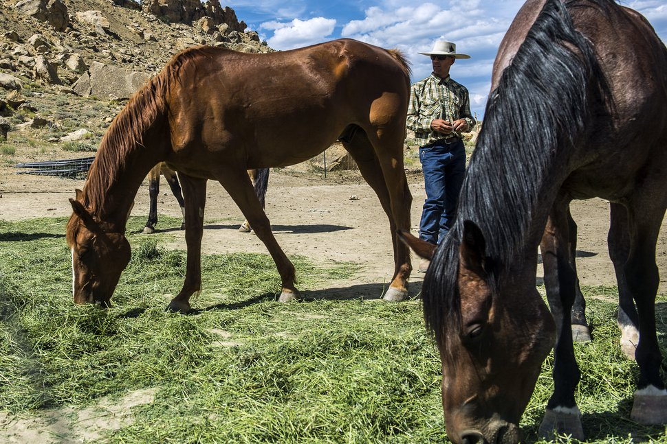 (Chris Detrick | Tribune file photo) Dave Treanor works with his horses in Escalante in 2015. Erin and Dave Treanor own Rising DT Ranch Horse Tours and provide horseback tours around the Grand Staircase-Escalante National Monument.