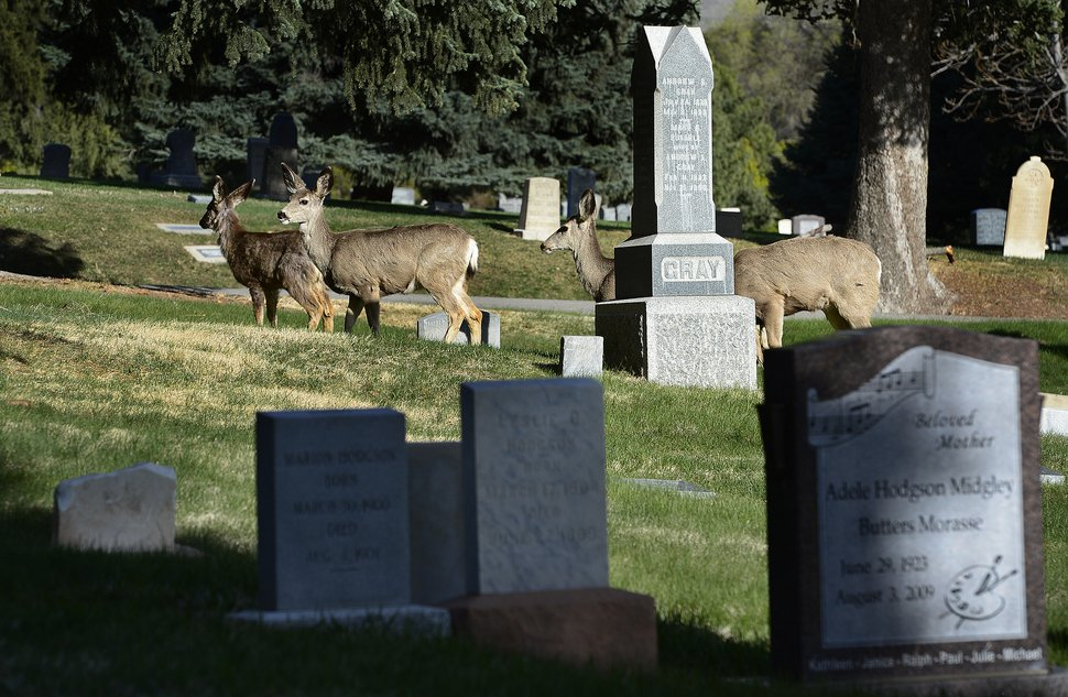 (Scott Sommerdorf | Tribune file photo) The Salt Lake City Cemetery, as seen on April 13, 2018. The cemetery is historic, beloved by relatives, neighbors, nature and recreation lovers — and needs about $27 million in repairs, improvements and financial aid.
