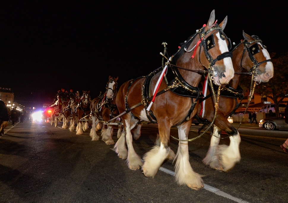 "(Francisco Kjolseth | The Salt Lake Tribune) Budweiser's iconic Clydesdales make a special trip to Utah to celebrate the changing beer laws in the state, joined by a ""ghoulish group of pallbearers,"" on Wed. Oct. 30, 2019, for a funeral procession for Utah's last remaining 3.2 percent beer, on their way to Bar X, Beer Bar and Johnny's on 200 South in Salt Lake City, as the state prepares to start selling 5 percent alcohol-by-volume in grocery and convenience stores starting Friday."