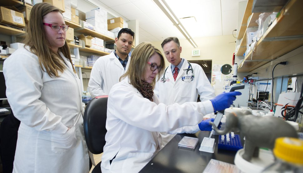 (Steve Griffin | Tribune file photo) Lab specialists Lauren Donovan Cristhian Toruno, Lisa Abegglen and researcher Joshua Schiffman, from left, are testing the effects of elephant gene p53 (EP53) in human cancer cells at the Huntsman Cancer Institute.
