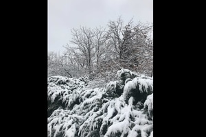 (Kolbie Peterson | The Salt Lake Tribune) A storm brought about 3 inches of snow to Salt Lake City, photographed Sunday, Jan. 24, 2021.