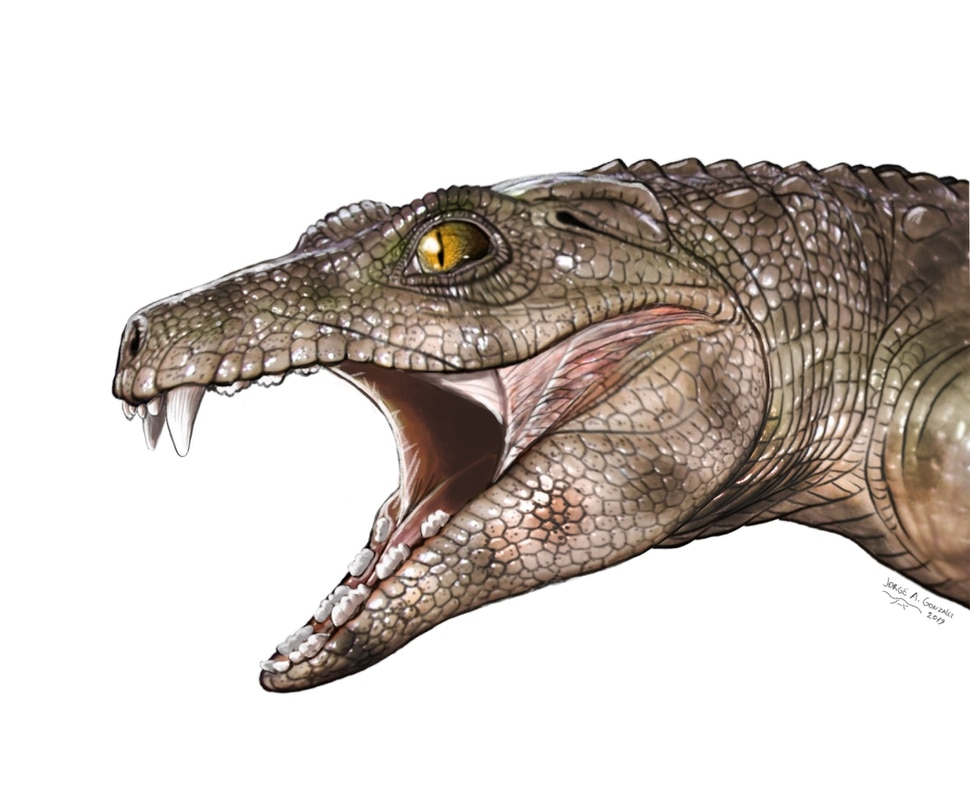 (Illustration courtesy of Jorge Gonzalez) A graphic shows what an extinct herbivore relative of crocodiles might have looked like.