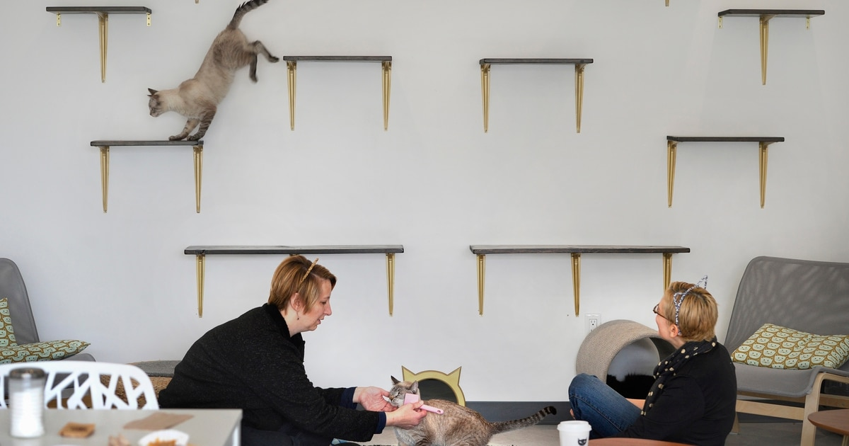 Tinkers Cat Cafe News