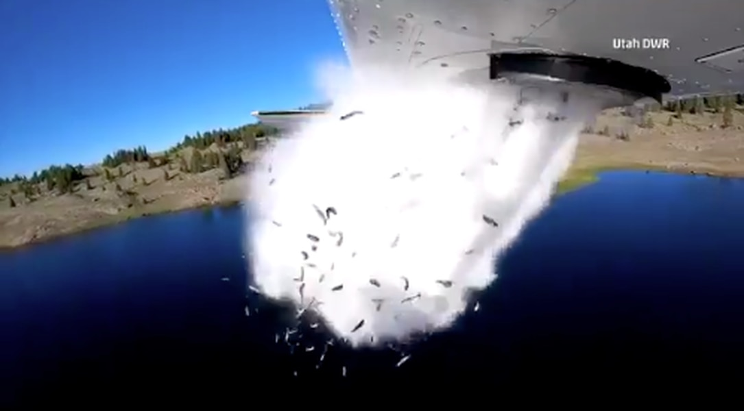 Utah DWR sends tiny trout skydiving into lake