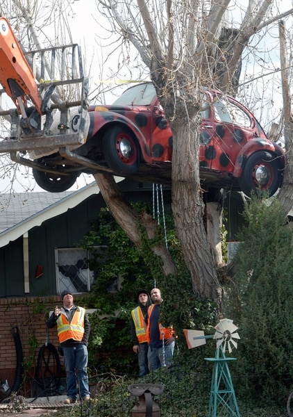 (Al Hartmann | The Salt Lake Tribune) Clearfield public works personnel use a crane to remove Janis Zettel's gutted VW Beetle from a tree in her front yard Tuesday Feb. 13. She put it up a few months ago as an art installation. Now it has to come down. Workers had to figure out how.
