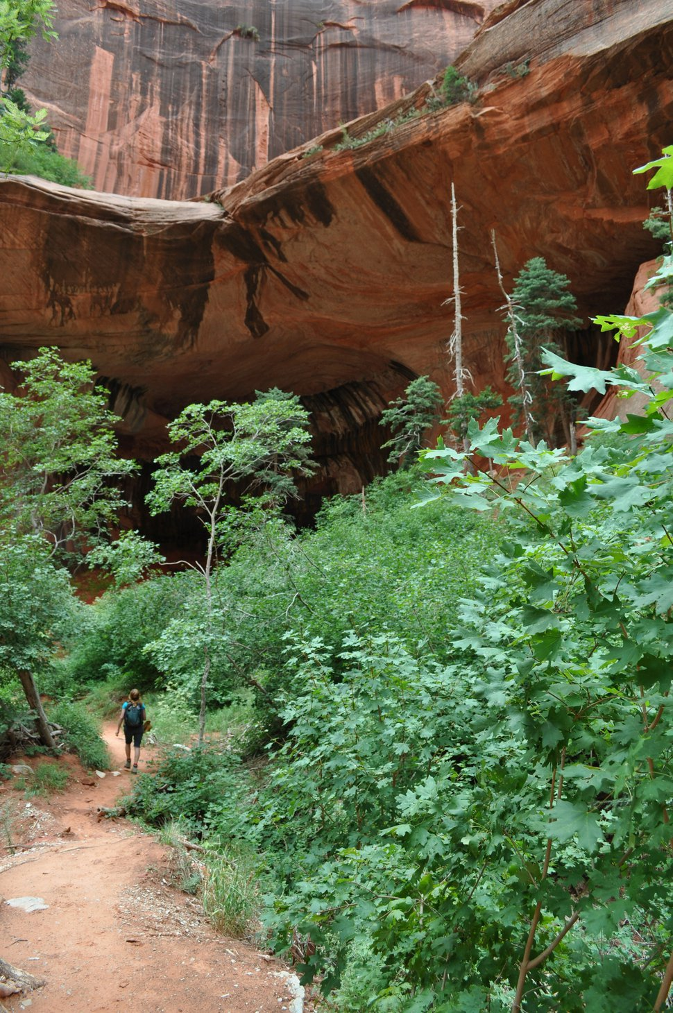 (Courtesy of Craig Buschmann) The hike along the Middle Fork of Taylor Creek leads to an alcove in the quiet Kolob Canyons section of Zion National Park in Utah. Photo taken August 2013.