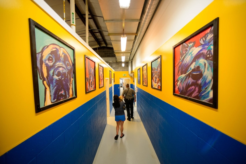 (Trent Nelson | The Salt Lake Tribune) Color and artwork cover the walls at Sandy City Animal Services on Monday April 22, 2019.