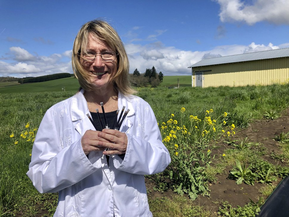 (Gillian Flaccus | AP) Cyndi Michael, a former medical marijuana grower, holds the last syringes of cannabis tincture she will process for sale in Rickreall, Ore., after deciding to no longer grow medical marijuana on April 12, 2019. The number of medical marijuana growers participating in Oregon's 20-year-old medical cannabis program has plummeted after the state legalized cannabis for all adults. Michael, who once grew for eight patients, could no longer make ends meet and also lost her business selling supplies to other medical marijuana growers.