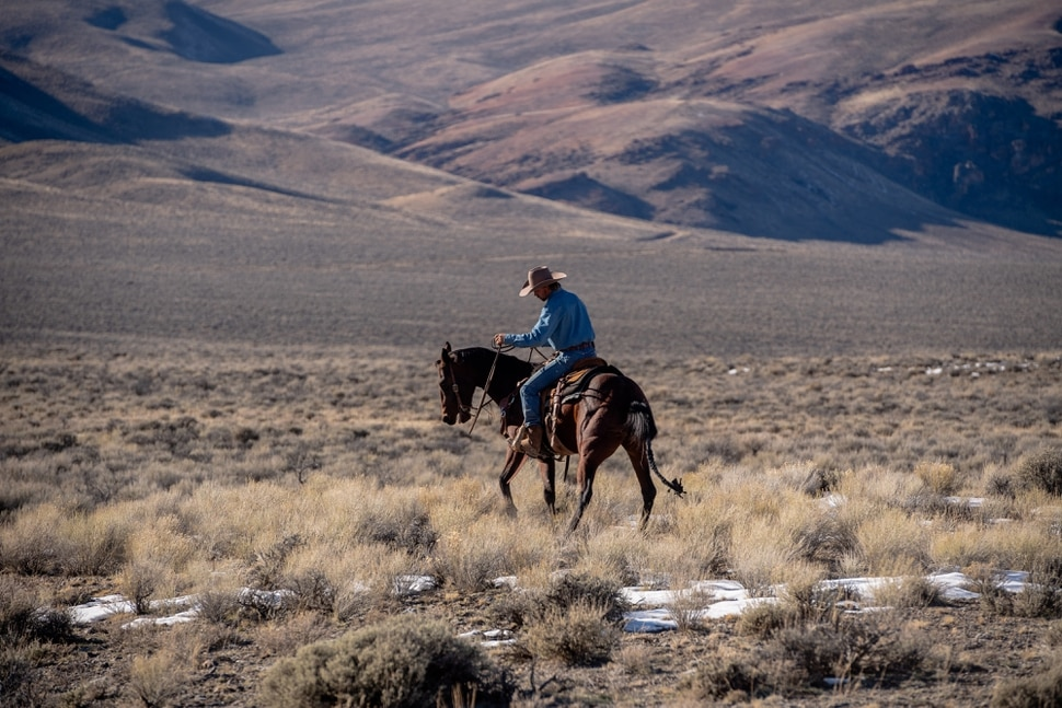 (Hilary Swift | The New York Times) A Bureau of Land Management worker helps round up wild horses in Challis, Idaho, Nov. 5, 2019. With too many animals on public lands and too many on the public's hands, the federal wild horse management program is short of money or palatable solutions.