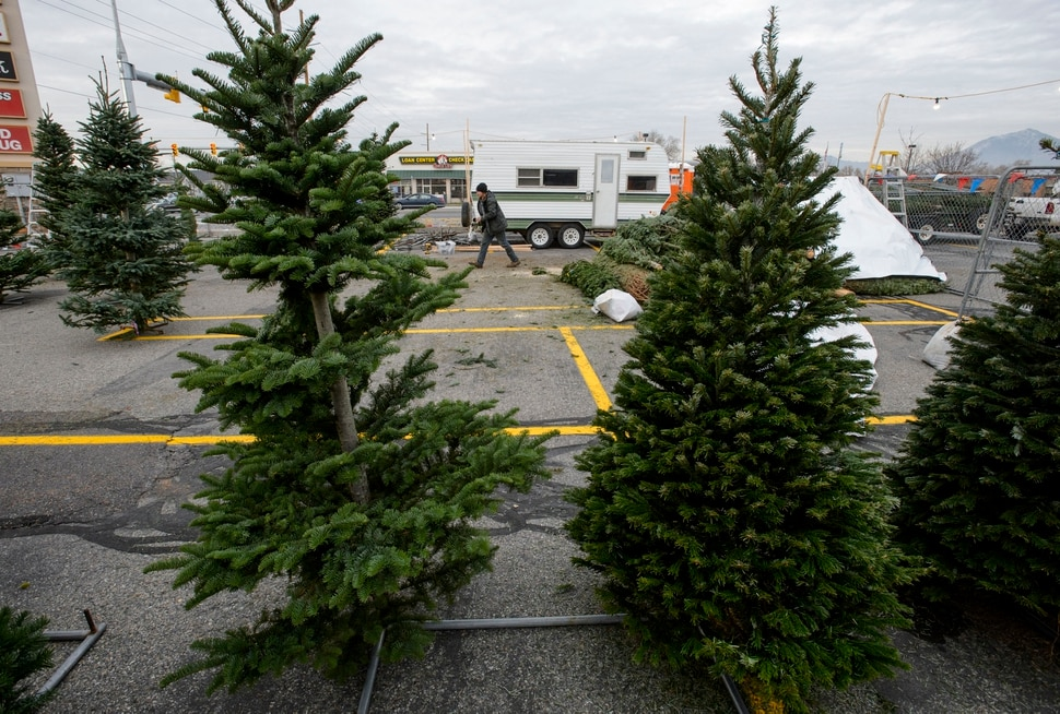 Utah Christmas tree lots will have less stock and higher prices this year due to a regional shortage