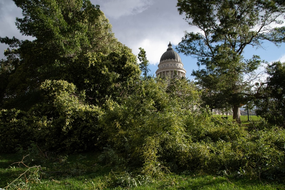 (Francisco Kjolseth | The Salt Lake Tribune) High winds cause extensive damage on the Capitol grounds in Salt Lake City on Tuesday, Sept. 8, 2020.