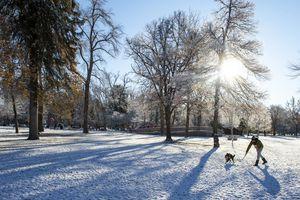 (Rick Egan | The Salt Lake Tribune) Eric  Stonehill plays with his dog Abner at Liberty Park, Thursday, Nov. 12, 2020.